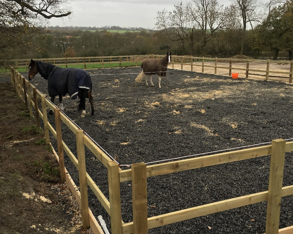turnout pen with two horses